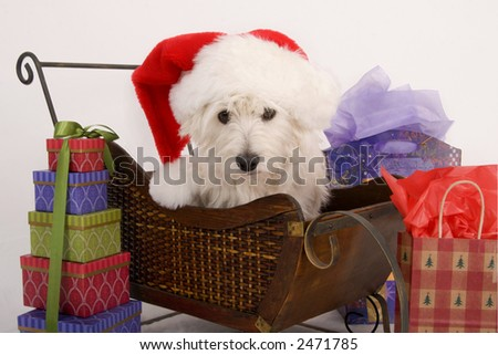 West Highland Terrier with Santa hat on sitting in a sled surrounded by Christmas gifts - stock photo