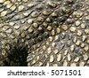 western australia, crocodile, skin - stock photo