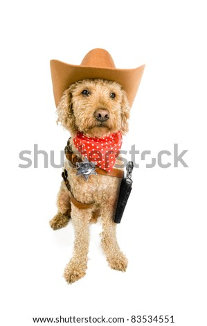 Western dog on white - stock photo