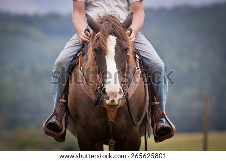 western ride style, horse with rider, jeans, blue background, horse listen to the rider, horse riding - stock photo