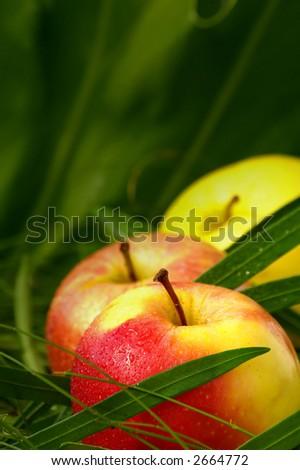 wet apple - stock photo