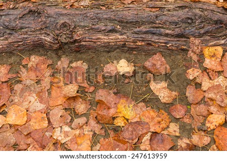 Wet autumn leaves and root on ground as background