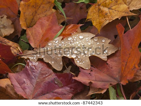Wet autumn leaves with drop of dew - stock photo