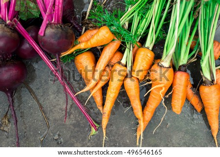 Wet beets and carrots on the wet ground. Harvest vegetables background, top view
