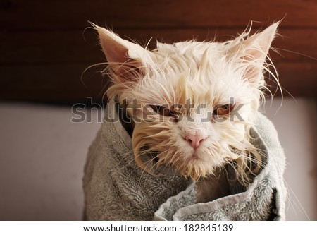 Wet cat after a bath, wrapped in a towel - stock photo