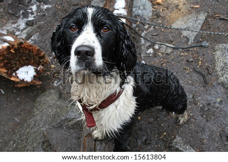 Wet Dog - stock photo