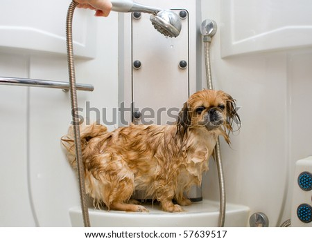wet dog in a light shower cabin after washing - stock photo