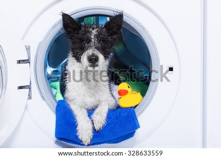 wet dog inside a washing machine ready to clean the  dirt, towel and rubber duck as companion - stock photo