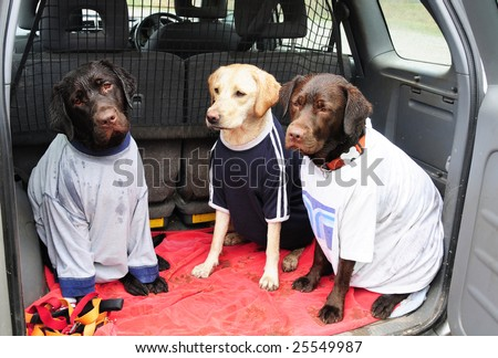 wet dogs in t shirts