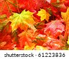 wet fall leaves - stock photo