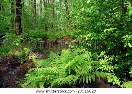 wet forest with fern