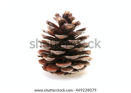 Wet gray pine cone isolated on white background