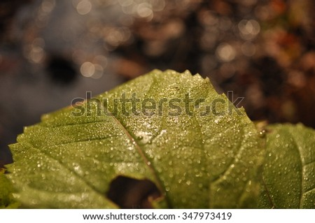 Wet Green Leaf Amongst Autumn Leaves - stock photo