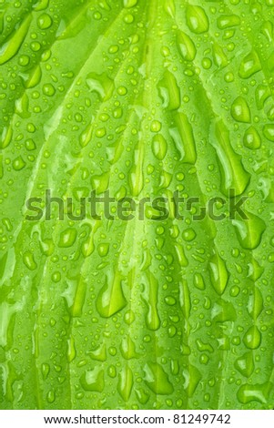 wet green leaf background