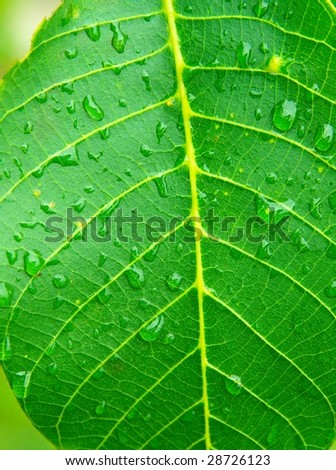 Wet, green leaf closeup with raindrops