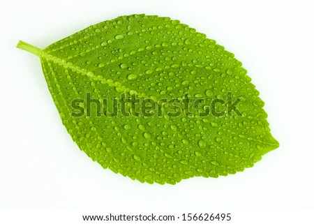 Wet green leaf isolated over white background - stock photo