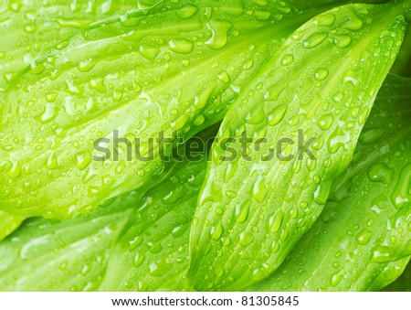 wet green leafs background close up - stock photo
