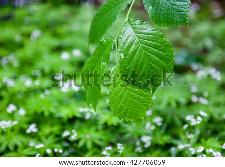 Wet green leaves after the rain against the green background. - stock photo