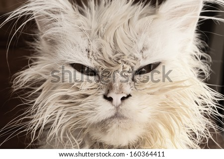 Wet kitten  - stock photo
