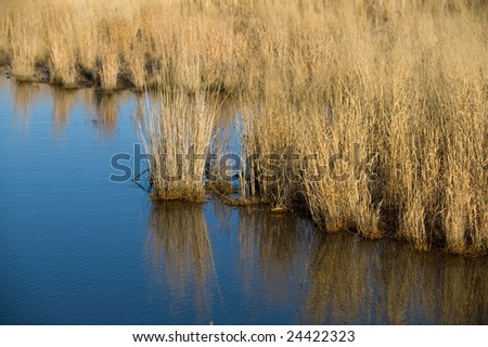 Wet Lands in Southern Jersey, USA - stock photo