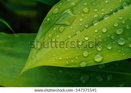 Wet leaf close up with dew drops - stock photo
