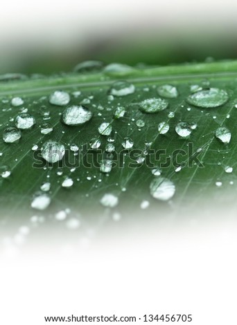 Wet leaf of a plant in Saint Lucia, Caribbean - stock photo