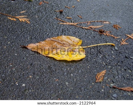 Wet Leaf on the Road