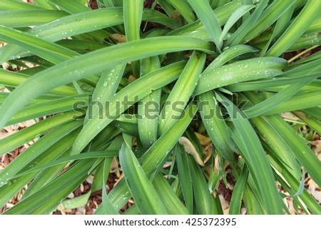 wet leaves - stock photo