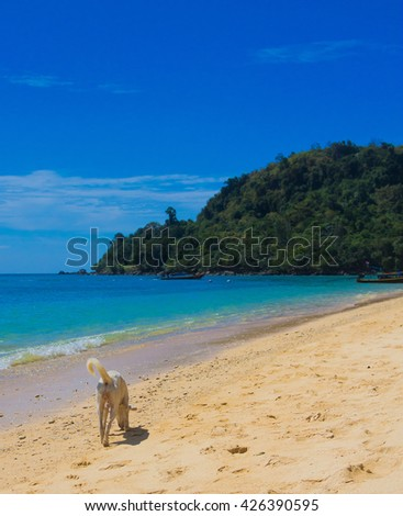 Wet Nose Under the Sun  - stock photo