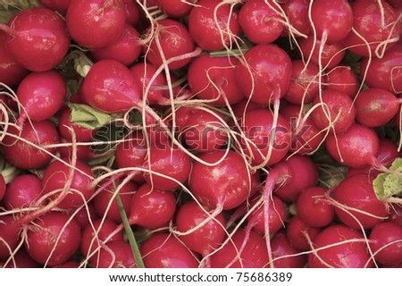 wet radishes in the market - stock photo
