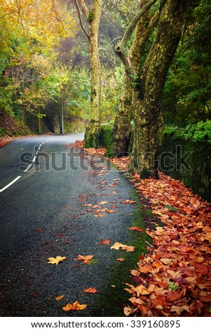 Wet road with trees and leaves in an atmospheric fall landscape - stock photo