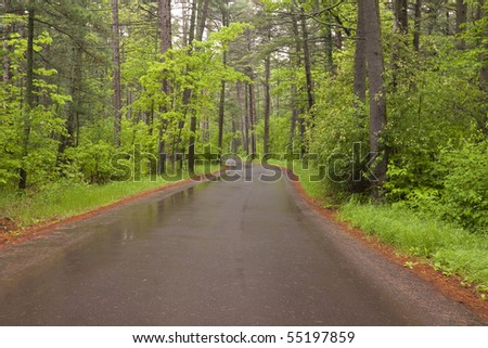 Wet Rural Road In Woods