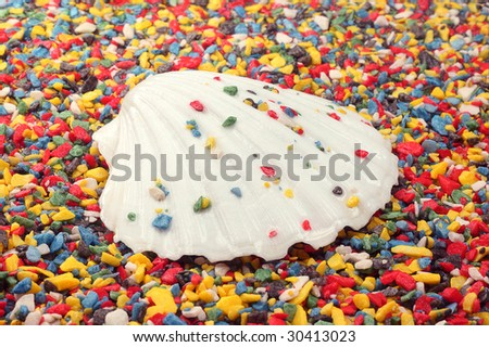 Wet sea-shell on small colored rocks - stock photo