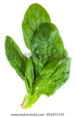 wet spinach leaves isolated on a white background in macro lens shot - stock photo