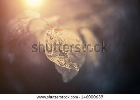 wet summer leafs under rain - stock photo