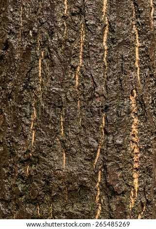 Wet tree bark, background - texture pattern, for designers - stock photo