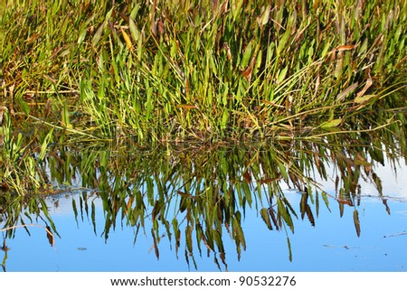 Wetland background scenery from a central Florida swamp. - stock photo