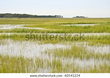 Wetland Conservation at the Virginia National Seashore - stock photo