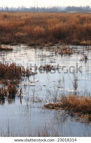 wetland landscape, - stock photo