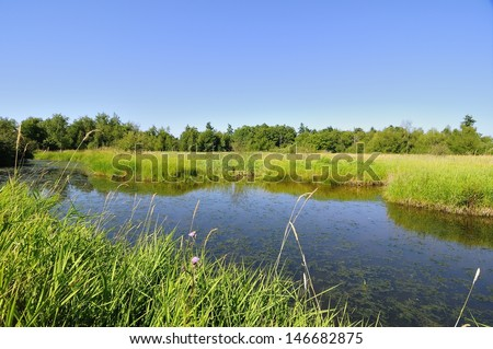 wetland of a migratory bird sanctuary