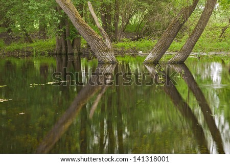 wetland with trees - stock photo
