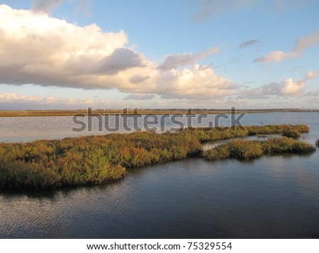bolsa chica wetlands Bolsa chica ecological reserve, huntington beach: see 240 reviews, articles, and 149 photos of bolsa chica ecological reserve, ranked no3 on tripadvisor among 60 attractions in huntington beach.