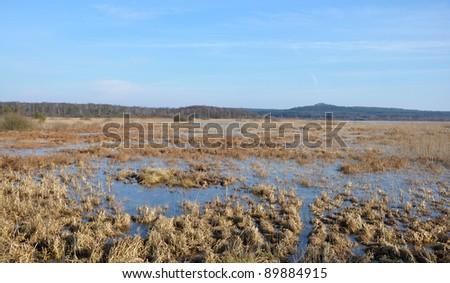 Wetlands in early spring, Ukraine - stock photo