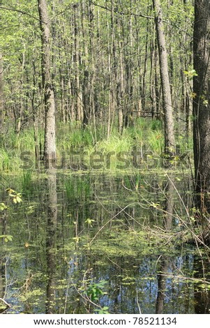 wetlands in the forest