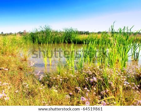 Wetlands - Marsh - stock photo
