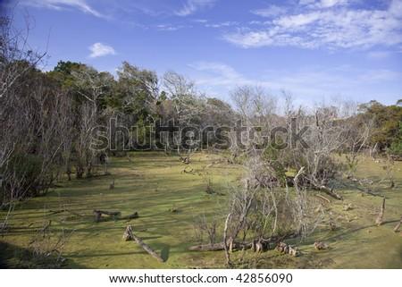 Wetlands near beach in St. Augustine, Florida - stock photo