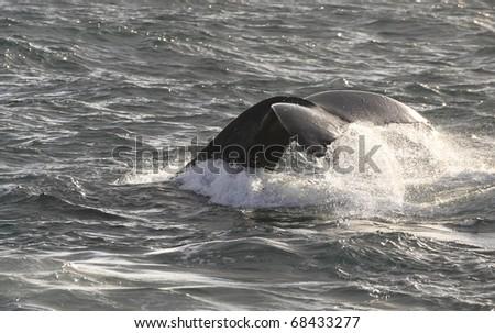 Whale - stock photo