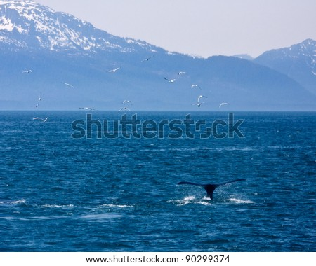 Whale and Mountains