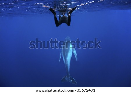 whale and snorkeller - stock photo