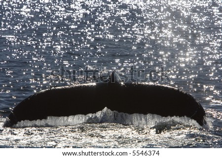 Whale Fin - stock photo